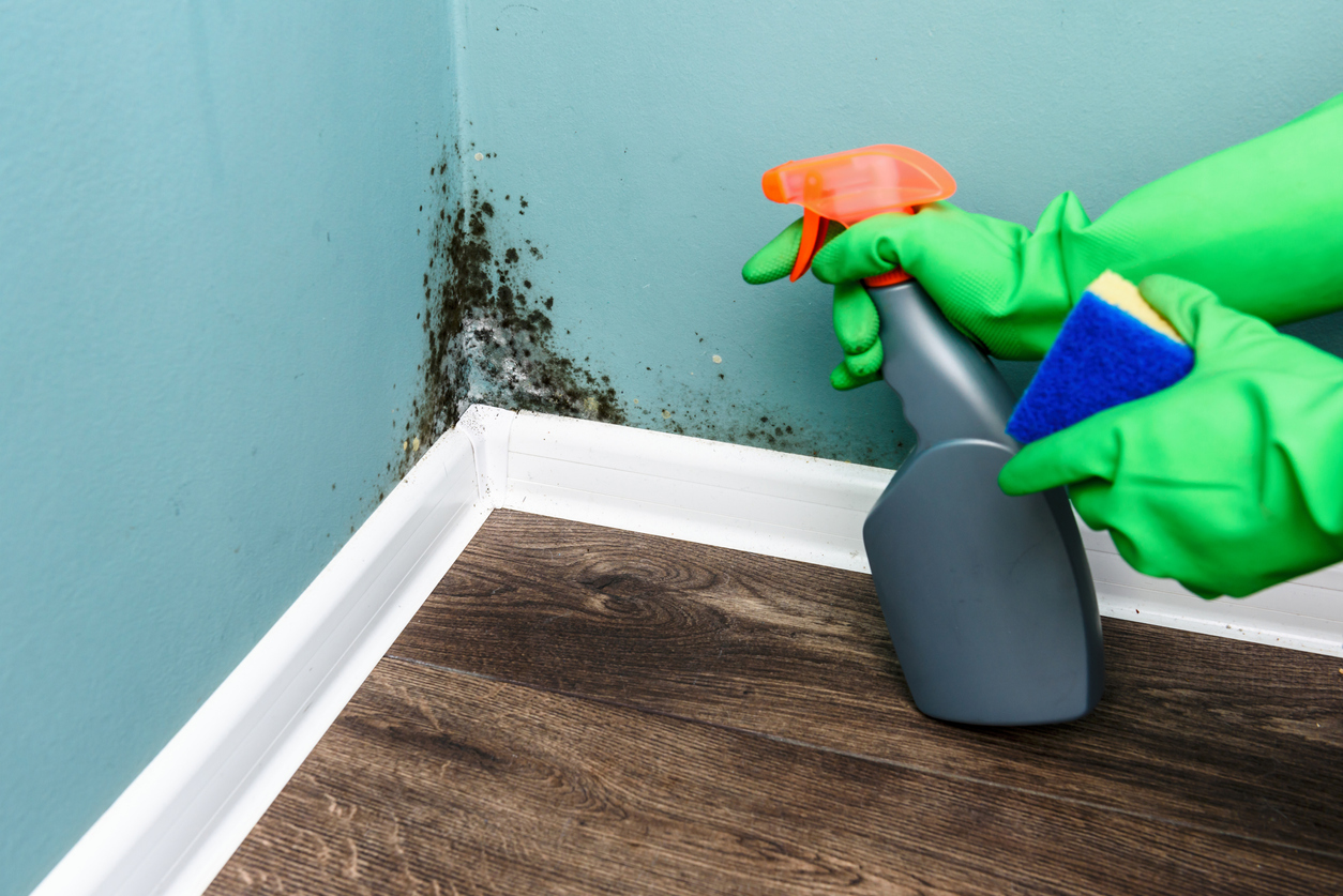 Mold – a Critical Issue